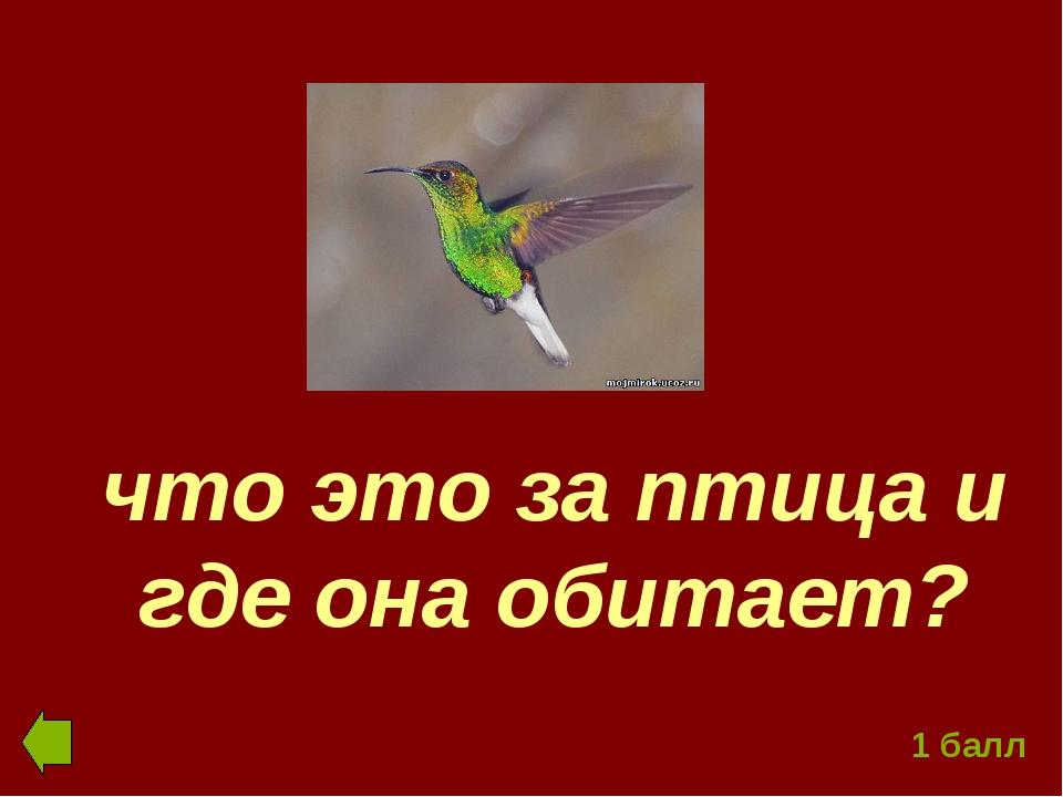что это за птица и где она обитает? 1 балл
