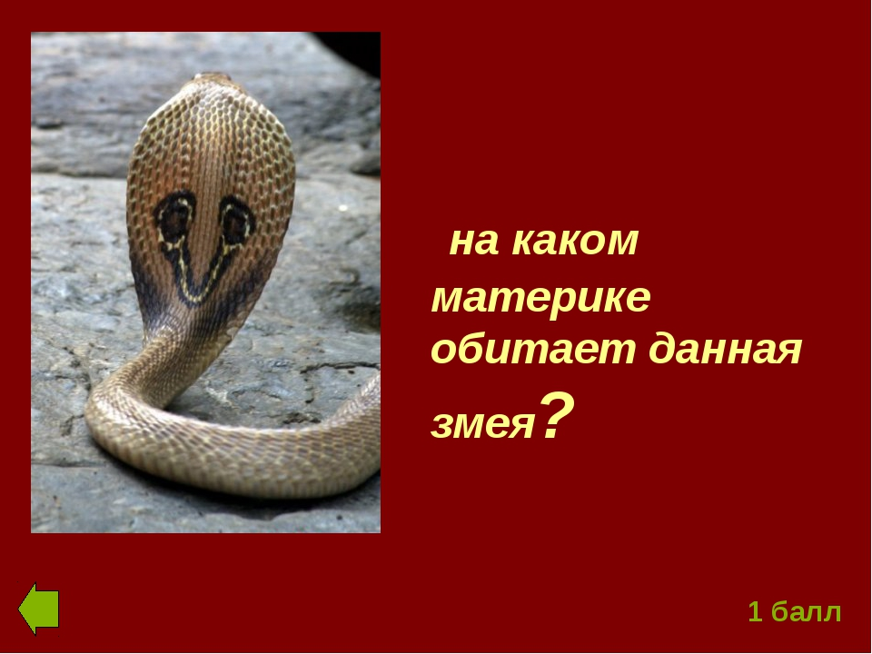 на каком материке обитает данная змея? 1 балл