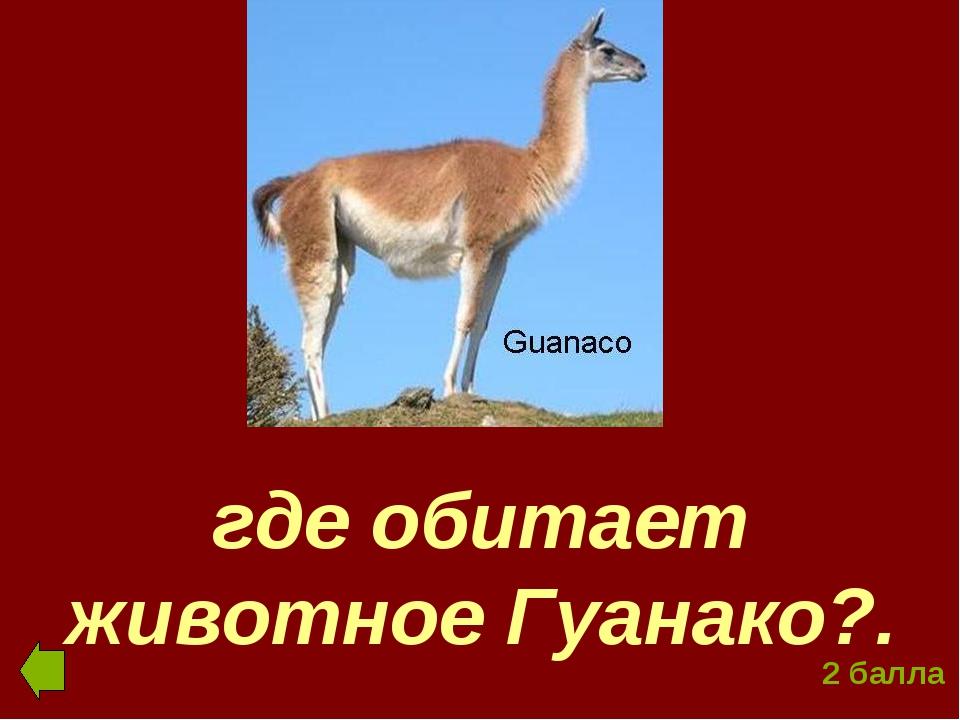 где обитает животное Гуанако?. 2 балла