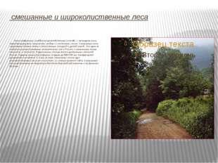смешанные и широколиственные леса Зона сме́шанных (хво́йно-широколи́ственных