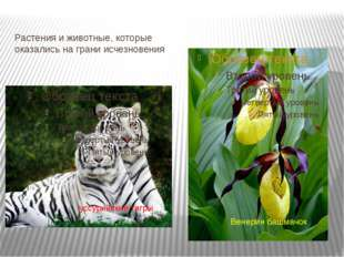 Растения и животные, которые оказались на грани исчезновения Венерин башмачок