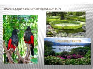 Флора и фауна влажных экваториальных лесов