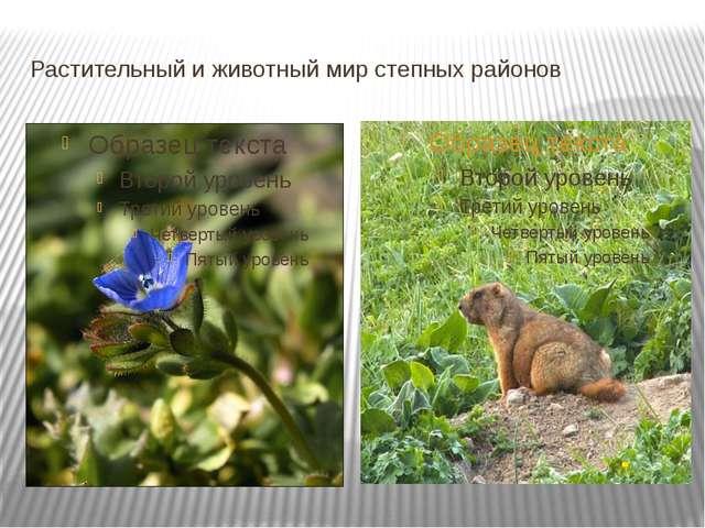 Растительный и животный мир степных районов
