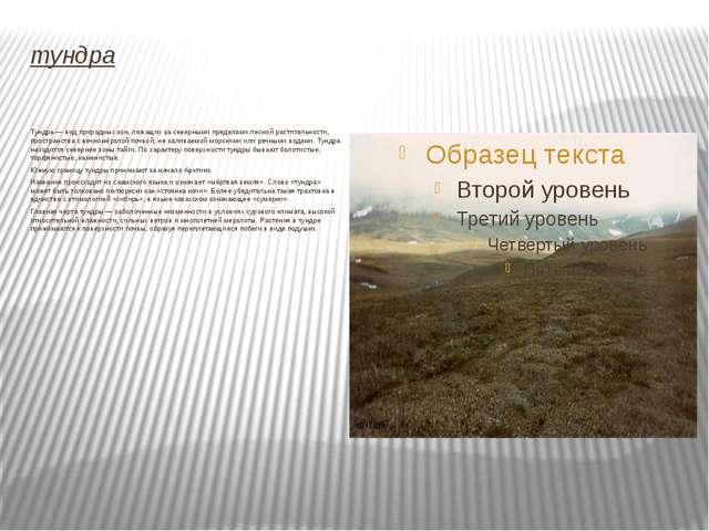 тундра Тундра — вид природных зон, лежащих за северными пределами лесной раст...