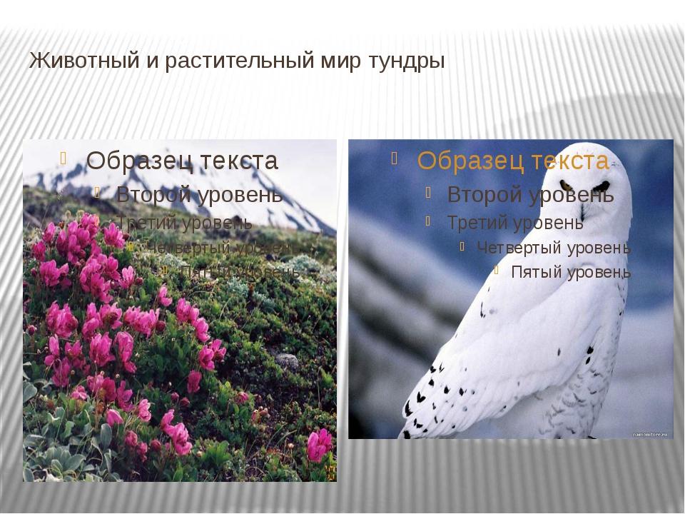 Животный и растительный мир тундры
