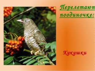Перелетают поодиночке: Кукушки