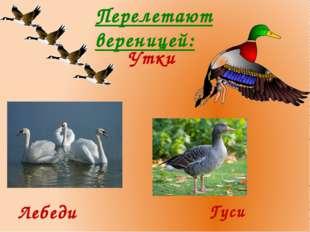 Перелетают вереницей: Утки Лебеди Гуси