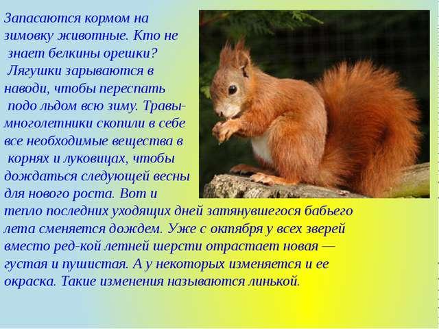 Запасаются кормом на зимовку животные. Кто не знает белкины орешки? Лягушки з...