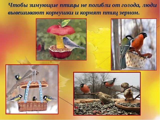Чтобы зимующие птицы не погибли от голода, люди вывешивают кормушки и кормят...