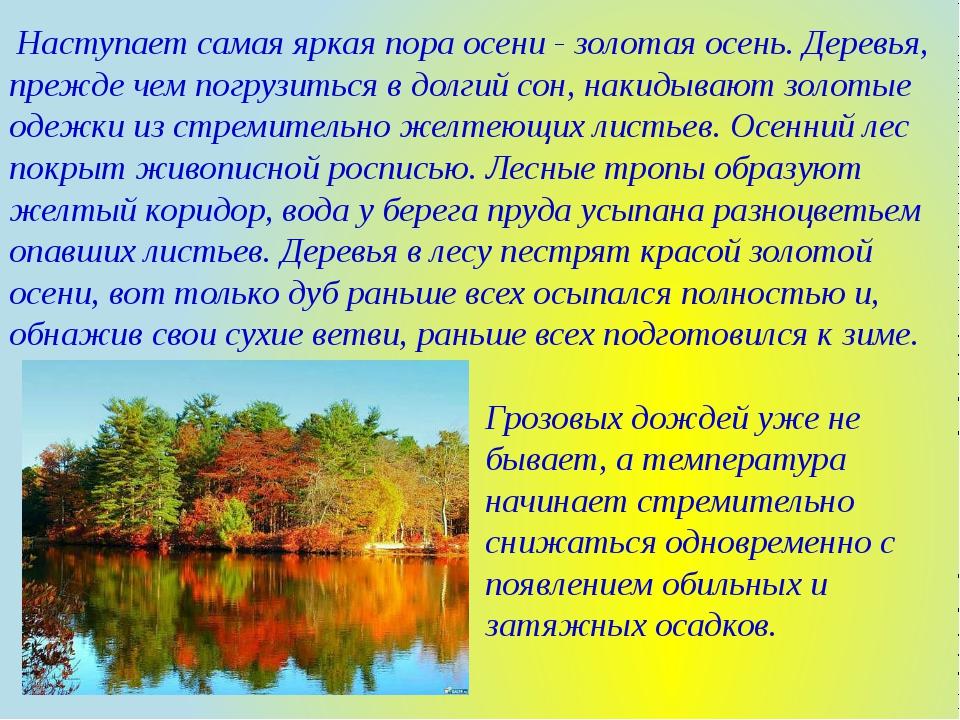 Наступает самая яркая пора осени - золотая осень. Деревья, прежде чем погруз...