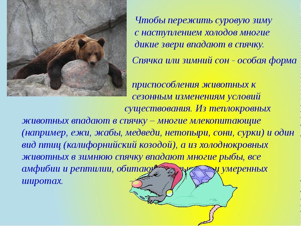 Чтобы пережить суровую зиму с наступлением холодов многие дикие звери впадают...