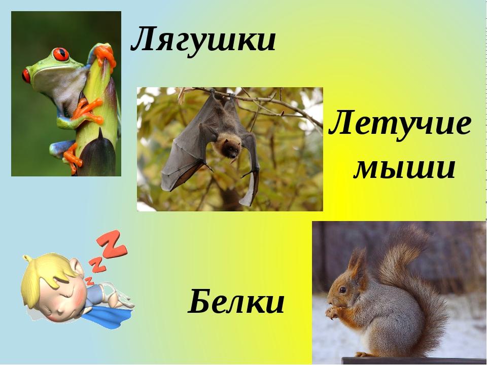 Лягушки Летучие мыши Белки