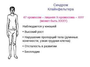 Синдром Клайнфельтера 47 хромосом – лишняя Х-хромосома – ХХY (может быть ХХХY