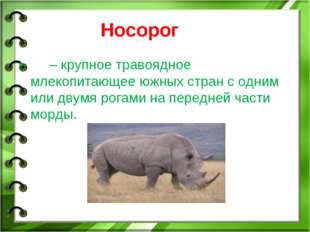 Носорог – крупное травоядное млекопитающее южных стран с одним или двумя рога
