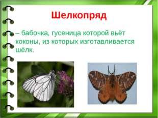 Шелкопряд – бабочка, гусеница которой вьёт коконы, из которых изготавливается