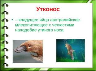 Утконос – кладущее яйца австралийское млекопитающее с челюстями наподобие ути