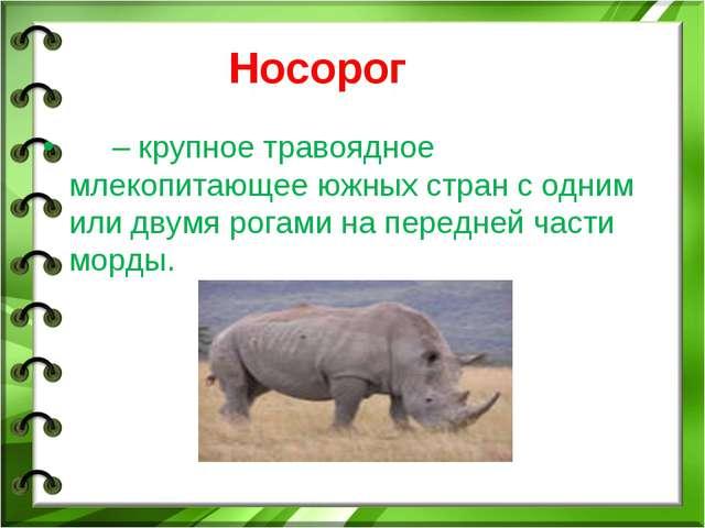 Носорог – крупное травоядное млекопитающее южных стран с одним или двумя рога...
