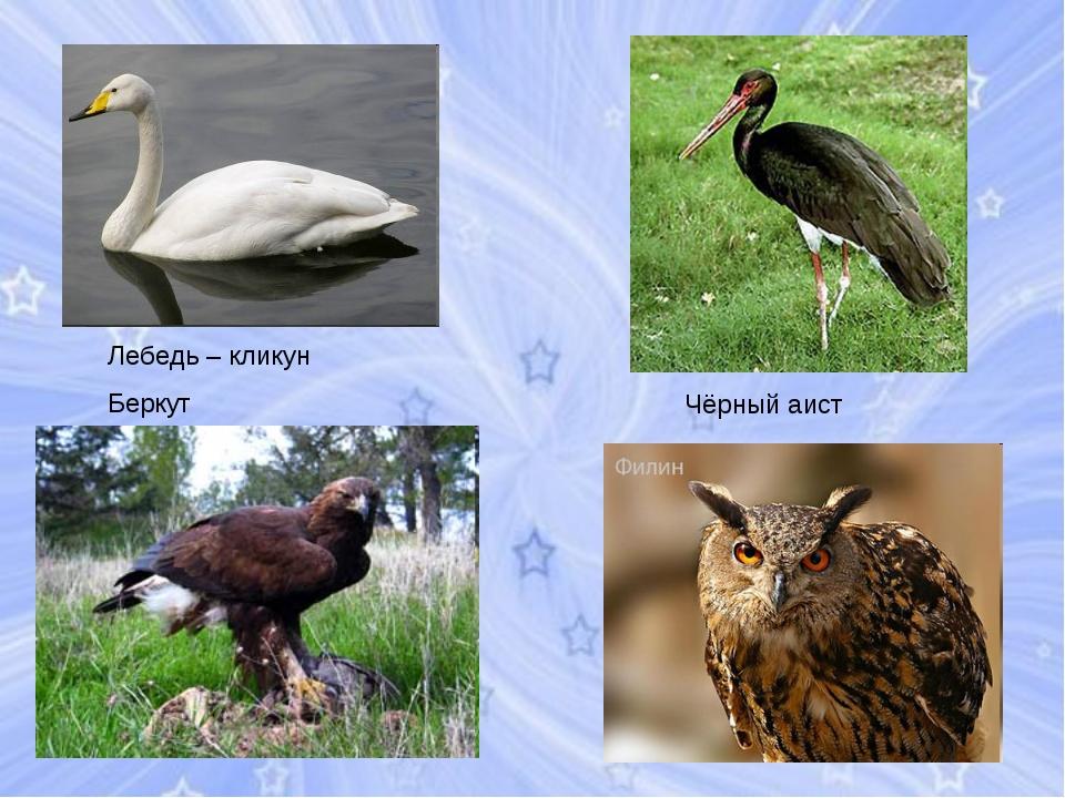 Чёрный аист Лебедь – кликун Беркут