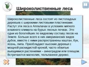 Широколиственные леса Широколиственные леса состоят из листопадных деревьев с