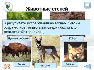 Животные степей Луговые собачки Койот Вилорог В результате истребления животн