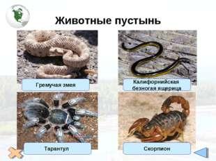 Животные пустынь Калифорнийская безногая ящерица Гремучая змея Тарантул Скорп