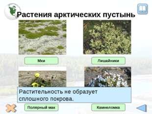 Растения арктических пустынь Полярный мак Камнеломка Мхи Лишайники Растительн