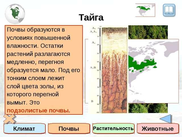 Тайга Климат Почвы Растительность Животные Тайга – это зона умеренного пояса...