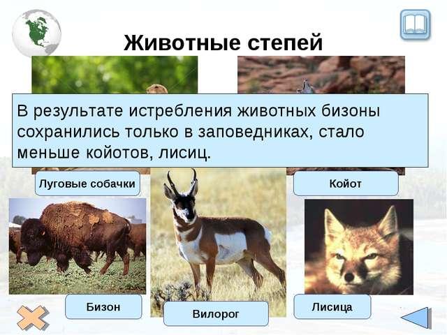 Животные степей Луговые собачки Койот Вилорог В результате истребления животн...