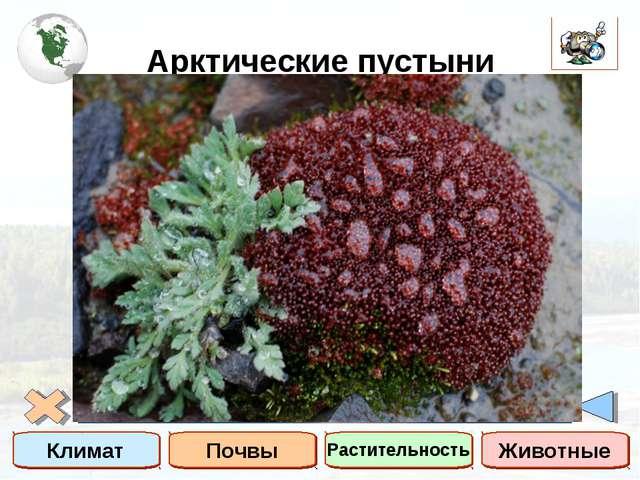 Арктические пустыни Климат Почвы Растительность Животные