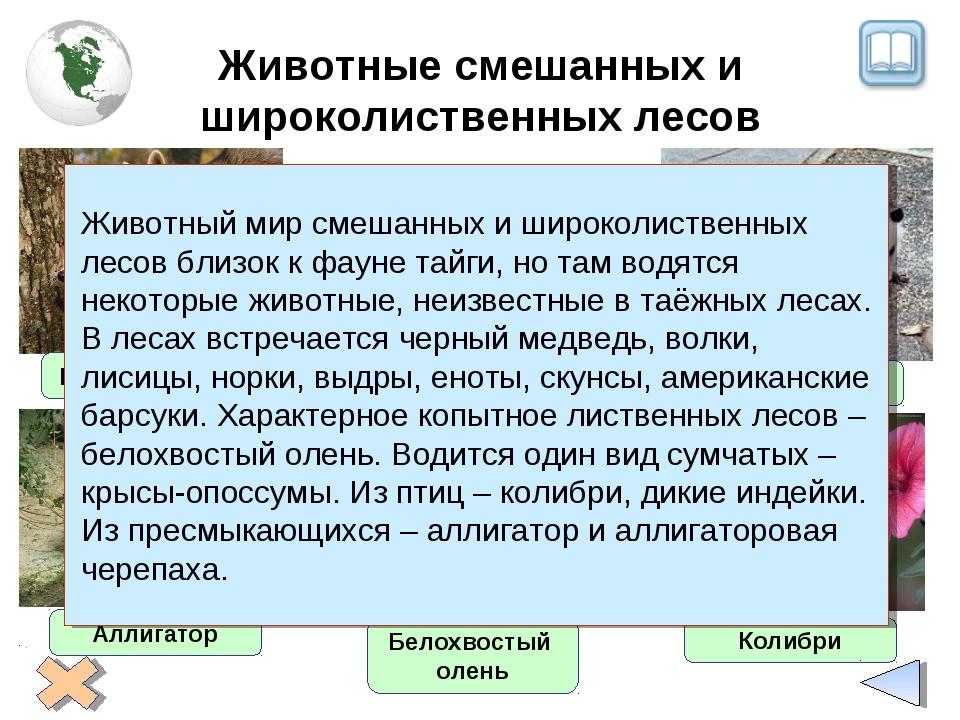 Животные смешанных и широколиственных лесов Енот-полоскун Белохвостый олень А...