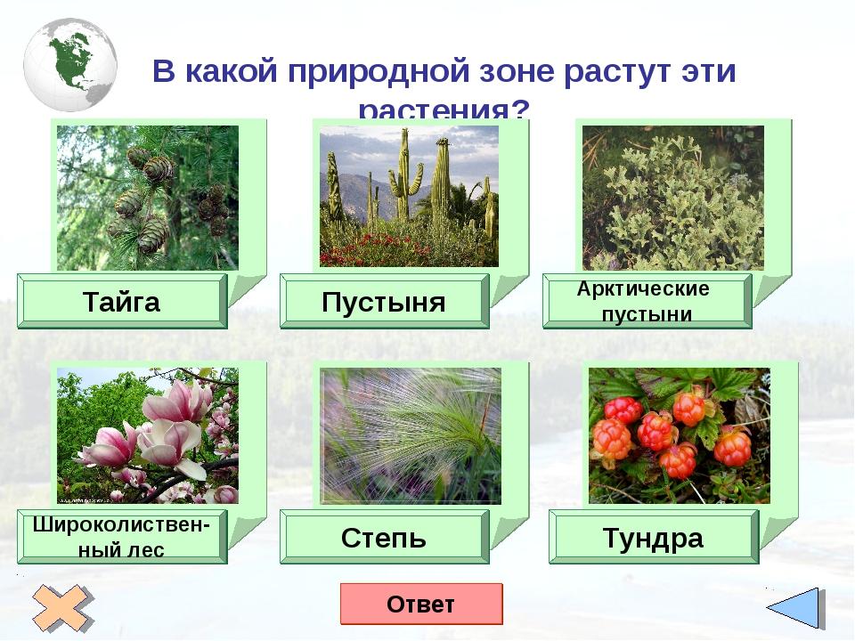 В какой природной зоне растут эти растения? Тайга Пустыня Арктические пустын...