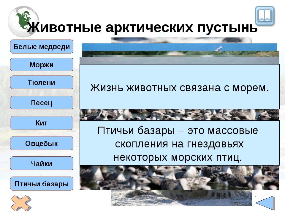 Животные арктических пустынь Белые медведи Тюлени Моржи Песец Кит Овцебык Чай...