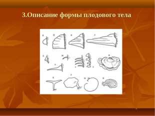 3.Описание формы плодового тела