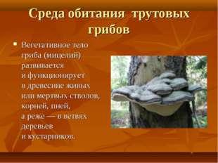 Среда обитания трутовых грибов Вегетативное тело гриба (мицелий) развивается