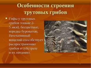 Особенности строения трутовых грибов Гифы утрутовых грибов тонкие 2-5мкм),