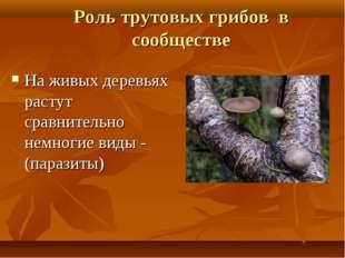 Роль трутовых грибов в сообществе На живых деревьях растут сравнительно немно