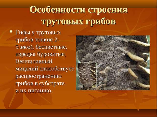 Особенности строения трутовых грибов Гифы утрутовых грибов тонкие 2-5мкм),...