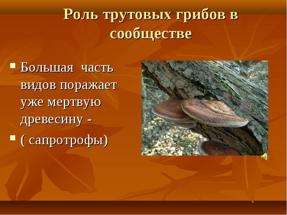 Роль трутовых грибов в сообществе Большая часть видов поражает уже мертвую др...