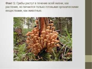 Факт 1: Грибы растут в течение всей жизни, как растения, но питаются только г