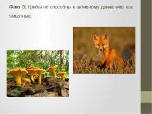 Факт 3: Грибы не способны к активному движению, как животные.