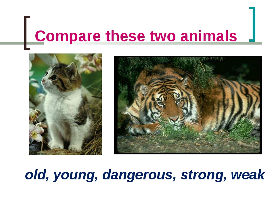 Compare these two animals old, young, dangerous, strong, weak
