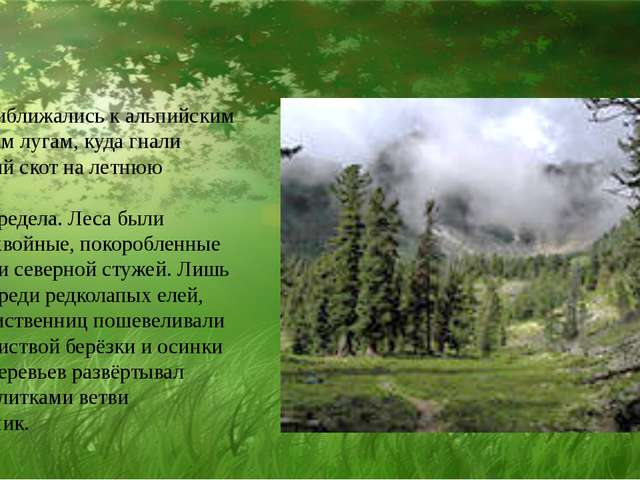 Мы приближались к альпийским уральским лугам, куда гнали колхозный скот на л...