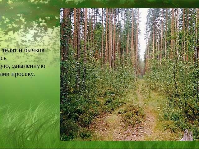 Стадо телят и бычков втянулось на старую, заваленную деревьями просеку.
