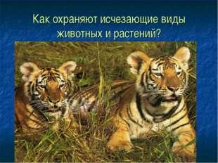 Как охраняют исчезающие виды животных и растений?