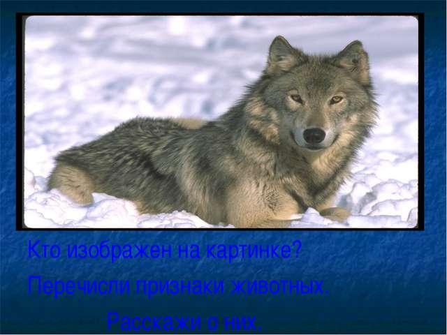 Кто изображен на картинке? Перечисли признаки животных. Расскажи о них.