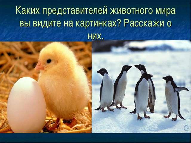 Каких представителей животного мира вы видите на картинках? Расскажи о них.