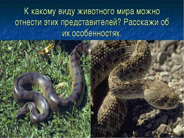 К какому виду животного мира можно отнести этих представителей? Расскажи об и...