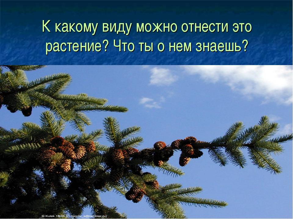 К какому виду можно отнести это растение? Что ты о нем знаешь?
