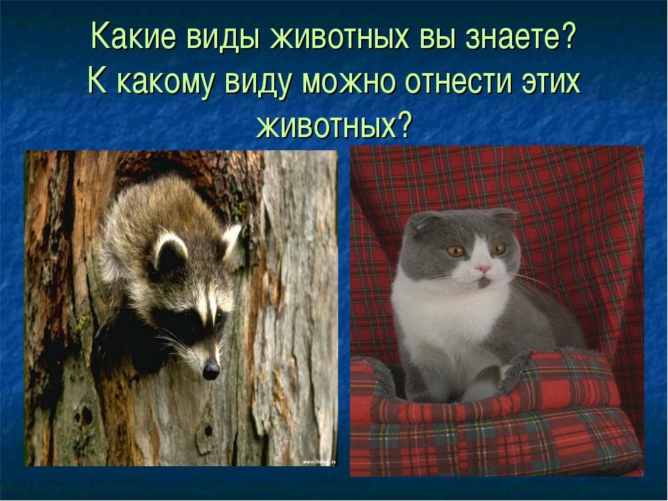 Какие виды животных вы знаете? К какому виду можно отнести этих животных?