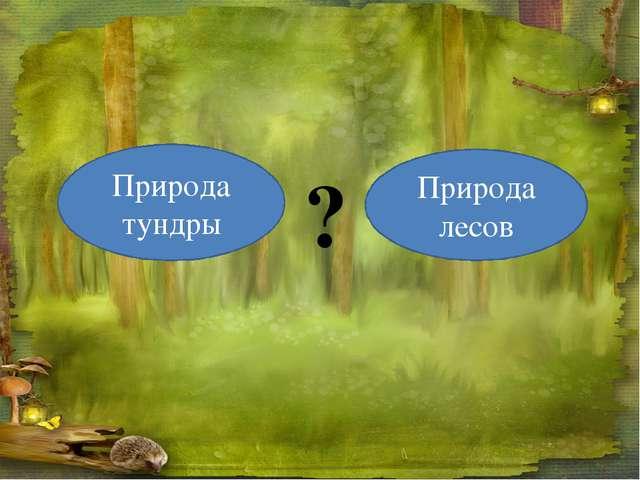 Природа тундры Природа лесов ?